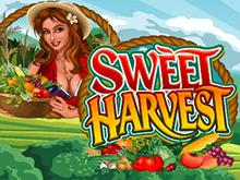 Sweet Harvest играть на деньги в казино Эльдорадо